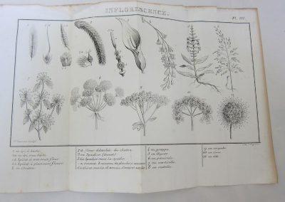 Lecciones de botanica-Detalle
